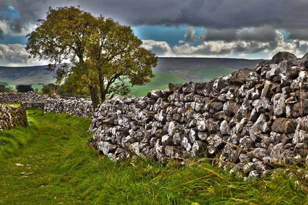 tree-and-stone-wall-11284391110PdDv